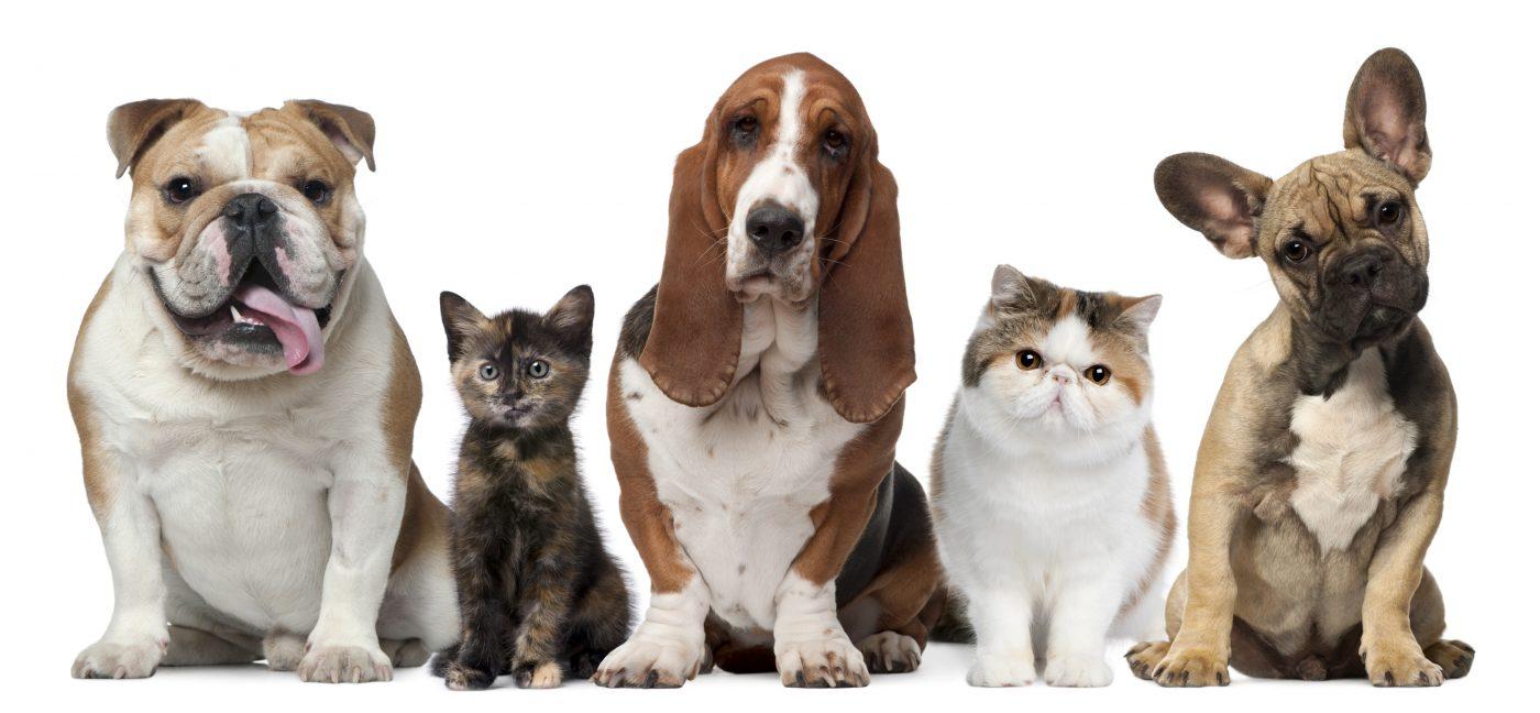 Ce spun animalele de companie despre persoana iubita