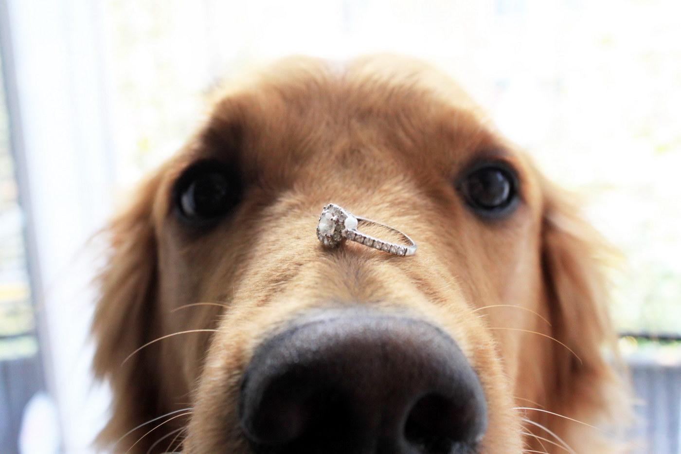 Cereri in casatorie pentru iubitorii de animale
