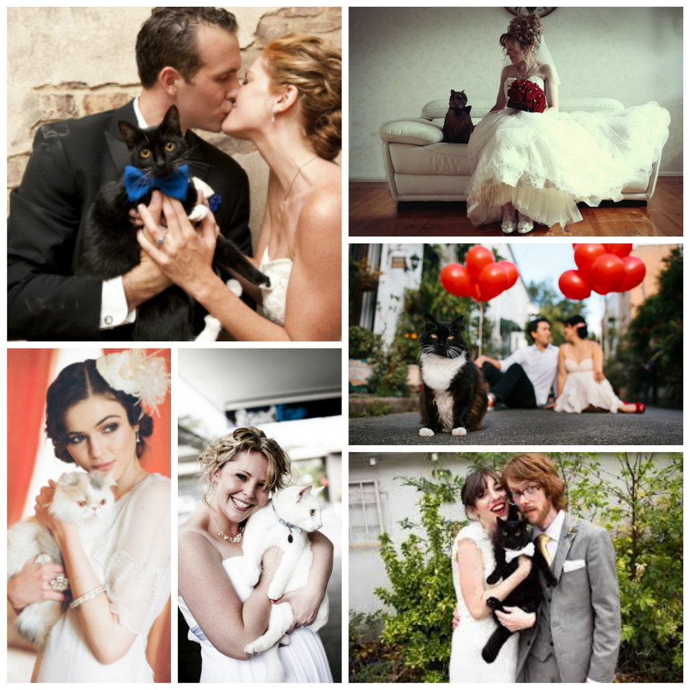 Animalele de companie la nunta