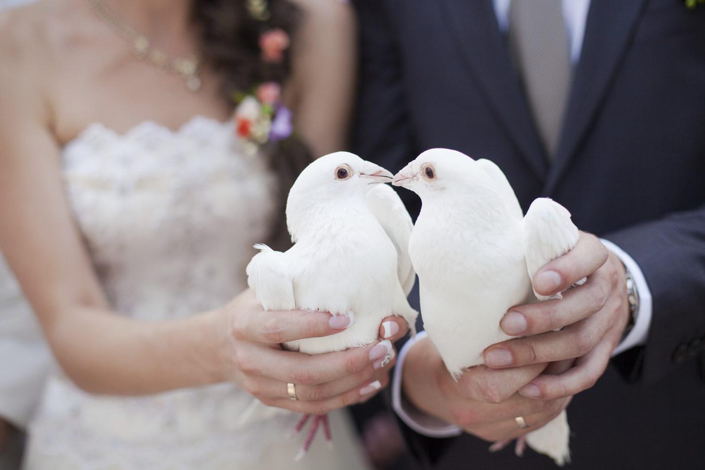 Eliberarea porumbeilor la nunta