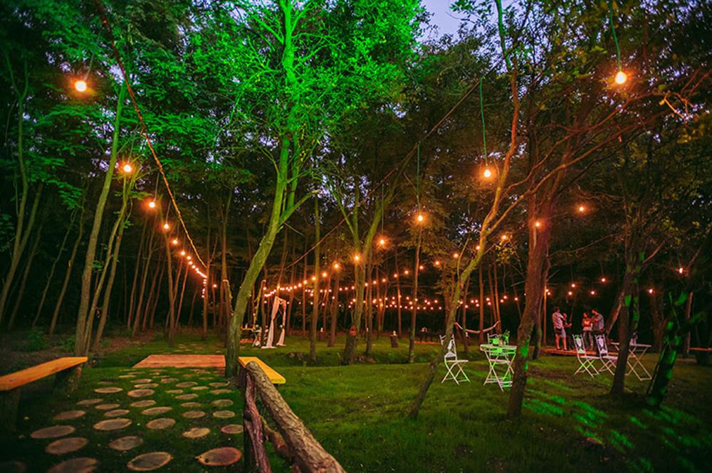 Nunta in pădure padurileregale.ro